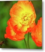 Bee Attraction Metal Print