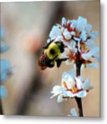 Bee Blossom Metal Print