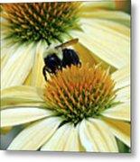 Bee Buzzer Metal Print