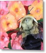 Bee Card Metal Print