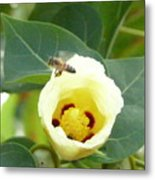 Bee Chowtime Metal Print