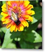 Bee Easy Metal Print
