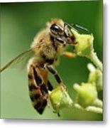 Bee Gathering Nectar Metal Print