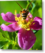 Bee Here Now Metal Print