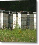 Bee Hives In A Farmer's Field Metal Print