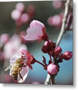 Bee In A Blossom Metal Print