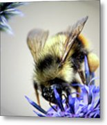 Bee In A Bubble Metal Print