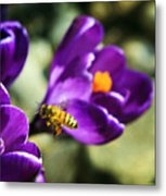 Bee In Flight Metal Print