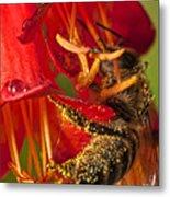 Bee In Flower Metal Print