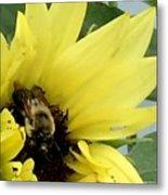 Bee In Sunflower Metal Print