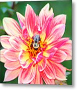 Bee In The Center Metal Print
