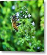 Bee Is In The Oregano Metal Print