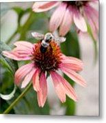 Bee Leaving Flower Metal Print