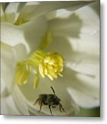 Bee Mine Metal Print