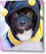 Chihuahua Says Bee Mine Metal Print