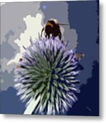 Bee On An Allium Metal Print