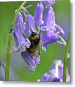 Bee On Bluebell Metal Print