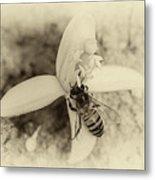 Bee On Citrus Flower Metal Print