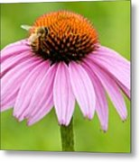 Bee On Cone Flower Metal Print