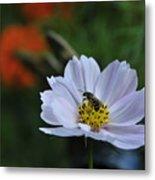 Bee On Daisy Metal Print