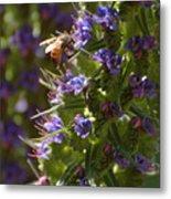Bee On Echium Metal Print