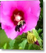 Bee On Edge Of A Hibiscus Flower Metal Print