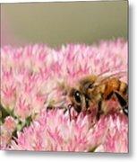 Bee On Flower 5 Metal Print