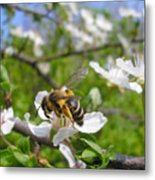 Bee On Flower On Tree Branch Metal Print