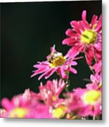 Bee On Flower Spring Scene Metal Print