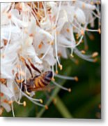 Bee On Flowers 1 Metal Print