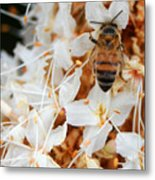 Bee On Flowers 2 Metal Print