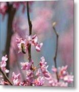 Bee On Pink Bloom Metal Print