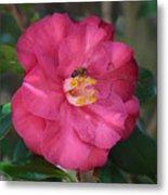 Bee On Pink Camellia Metal Print