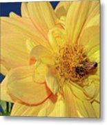 Bee On Pretty Dahlia By Kaye Menner Metal Print