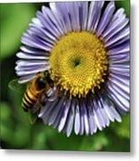 Bee On Purple Petals Metal Print