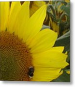 Bee On Sunflower 1 Metal Print