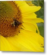 Bee On Sunflower 3 Metal Print