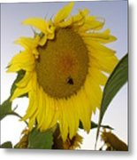 Bee On Sunflower 5 Metal Print