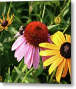 Bee On The Cone Flower Metal Print