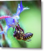 Bee On The Flower Metal Print