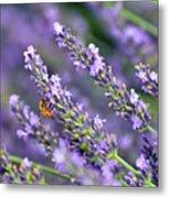 Bee On The Lavender Metal Print