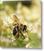 Bee On Top Of Things Metal Print