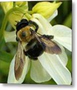 Bee On White Metal Print