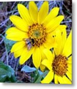 Bee On Wild Sunflowers Metal Print