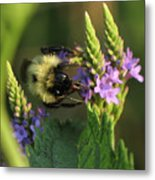 Bee On Wildflower Metal Print