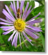 Bee On Wildflower Metal Print