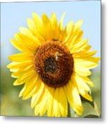 Bee On Yellow Sunflower Metal Print