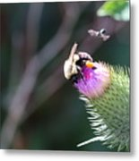 Bee Pollination Metal Print