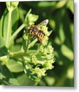 Bee Resting Metal Print