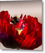 Bee Right Back With Red Flower Metal Print